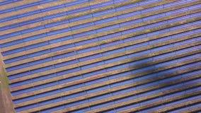 Vista aerea dei pannelli solari che raccolgono vita verde pulita di energia di Sun della natura di conservazione dell'innovazione stock footage