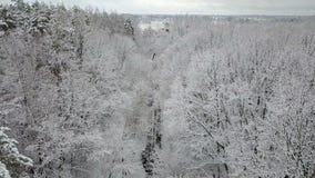 Vista aerea dei rami di alberi innevati video d archivio