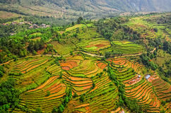 Vista aerea dei terrazzi variopinti del giacimento del riso Fotografia Stock Libera da Diritti