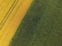 Vista aerea del campo dell'orzo e del mais Immagini Stock Libere da Diritti