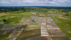 Vista aerea del campo di agricoltura, terrazzo del riso nel mahasarakham n Immagini Stock