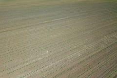 Vista aerea del campo di grano Campo di grano della molla di vista superiore Immagini Stock