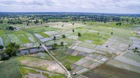Vista aerea del campo di risaia e dell'area di agricoltura nell'ea del nord Fotografie Stock Libere da Diritti