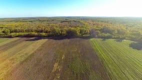 Vista aerea del campo e della foresta video d archivio