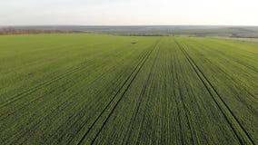 Vista aerea del campo verde agricolo con le linee di fila stock footage