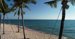 Vista aerea del colpo del fuco delle giovani donne che oscillano alla spiaggia sabbiosa tropicale video d archivio