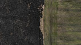 Vista aerea del confine del campo bruciato e seminato La vista superiore con scala la tecnica archivi video
