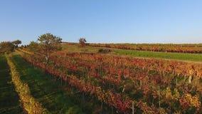 Vista aerea del fuco dei campi variopinti delle vigne archivi video