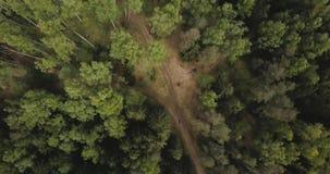 Vista aerea del fuco della foresta dal cielo, sopra gli alberi e le strade Paesaggio russo con i pini ed abete, giorno soleggiato video d archivio