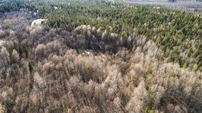 Vista aerea del fuco della foresta di autunno in primavera fotografie stock libere da diritti