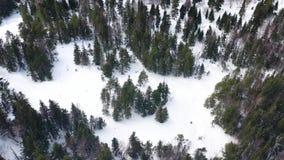 Vista aerea del fuco della foresta di inverno coperta in neve, bellezza della natura metraggio Foresta congelata dei pini, vista  video d archivio