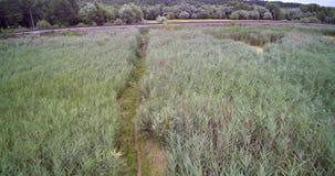 Vista aerea del fuco della pista del treno di Cane Reed Field Wooden Bridge And vicino alla palude archivi video