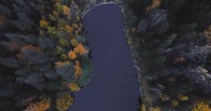 Vista aerea del fuco del lago e della foresta, sopra gli alberi Paesaggio russo con i pini e l'abete, uguaglianti tempo in natura video d archivio