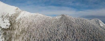 Vista aerea del fuco del legno innevato dopo precipitazioni nevose Alpi italiane Immagini Stock
