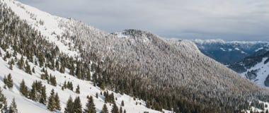 Vista aerea del fuco del legno innevato dopo precipitazioni nevose Alpi italiane Fotografie Stock
