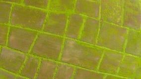 Vista aerea del giacimento del riso del colpo archivi video