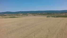 Vista aerea del giacimento di grano con le montagne archivi video