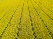 Vista aerea del giacimento giallo di fioritura del seme di ravizzone al giorno soleggiato Fotografia Stock Libera da Diritti