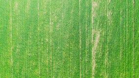 Vista aerea del giacimento verde della molla stock footage