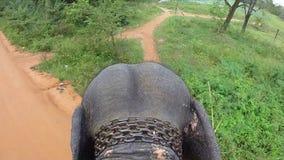 Vista aerea del giro dell'elefante con le orecchie di sbattimento e della testa, catena intorno al collo, camminante lentamente archivi video