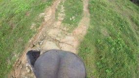 Vista aerea del giro dell'elefante con le orecchie di sbattimento e della testa, sollevando il suo tronco, camminante lentamente stock footage