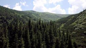 Vista aerea del paesaggio della montagna di estate carpathians stock footage
