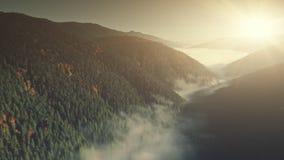 Vista aerea del pendio della foresta di conifere della montagna nebbiosa video d archivio