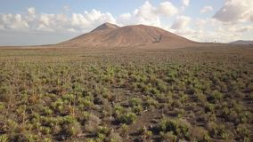 Vista aerea del raccolto dell'agave