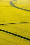 Vista aerea del seme di ravizzone giallo Fotografie Stock