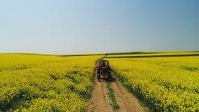 Vista aerea del trattore agricolo in un giacimento del seme di ravizzone, bello giorno di molla video d archivio