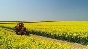 Vista aerea del trattore agricolo in un giacimento del seme di ravizzone, bello giorno di molla stock footage