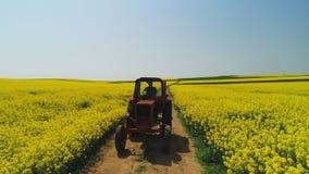 Vista aerea del trattore agricolo in un giacimento del seme di ravizzone, bello giorno di molla archivi video