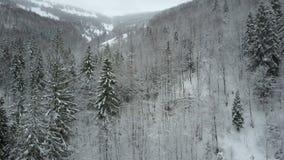 Vista aerea del volo basso della foresta nevosa attillata di inverno sopra un fiume ed i pini coperti da neve Bellezza di fauna s stock footage