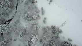 Vista aerea del volo basso della foresta nevosa attillata di inverno sopra un fiume ed i pini coperti da neve Bellezza di fauna s archivi video