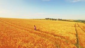 Vista aerea dell'agricoltore che cammina attraverso i suoi campi video d archivio