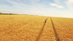 Vista aerea dell'agricoltore che cammina attraverso i suoi campi stock footage
