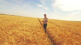 Vista aerea dell'agricoltore che cammina attraverso i suoi campi archivi video