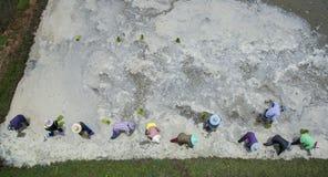 Vista aerea dell'agricoltore tailandese che pianta giovane risaia nel agricult Fotografia Stock Libera da Diritti