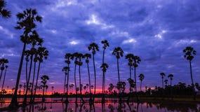 Vista aerea dell'albero della palma da zucchero con il cielo di tramonto Fotografia Stock Libera da Diritti