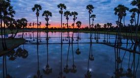 Vista aerea dell'albero della palma da zucchero con il cielo di tramonto Fotografie Stock Libere da Diritti