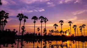 Vista aerea dell'albero della palma da zucchero con il cielo di tramonto Immagini Stock Libere da Diritti