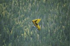 Vista aerea dell'aliante di caduta Immagini Stock
