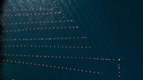 Vista aerea dell'azienda agricola delle cozze, mare adriatico Fotografia Stock