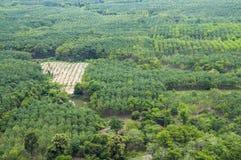 Vista aerea dell'azienda agricola di agricoltura in Tailandia Immagine Stock Libera da Diritti