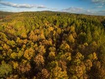 Vista aerea dell'foreste Fotografia Stock Libera da Diritti