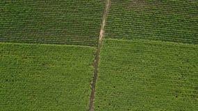 Vista aerea della canna da zucchero o dell'agricoltura in Tailandia rurale Fotografia Stock