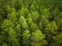 Vista aerea della foresta fotografie stock