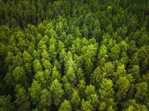 Vista aerea della foresta fotografie stock libere da diritti