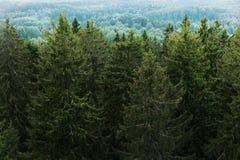 Vista aerea della foresta - alberi attillati dalla cima Fotografie Stock