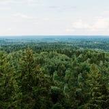Vista aerea della foresta - alberi attillati dalla cima Immagine Stock